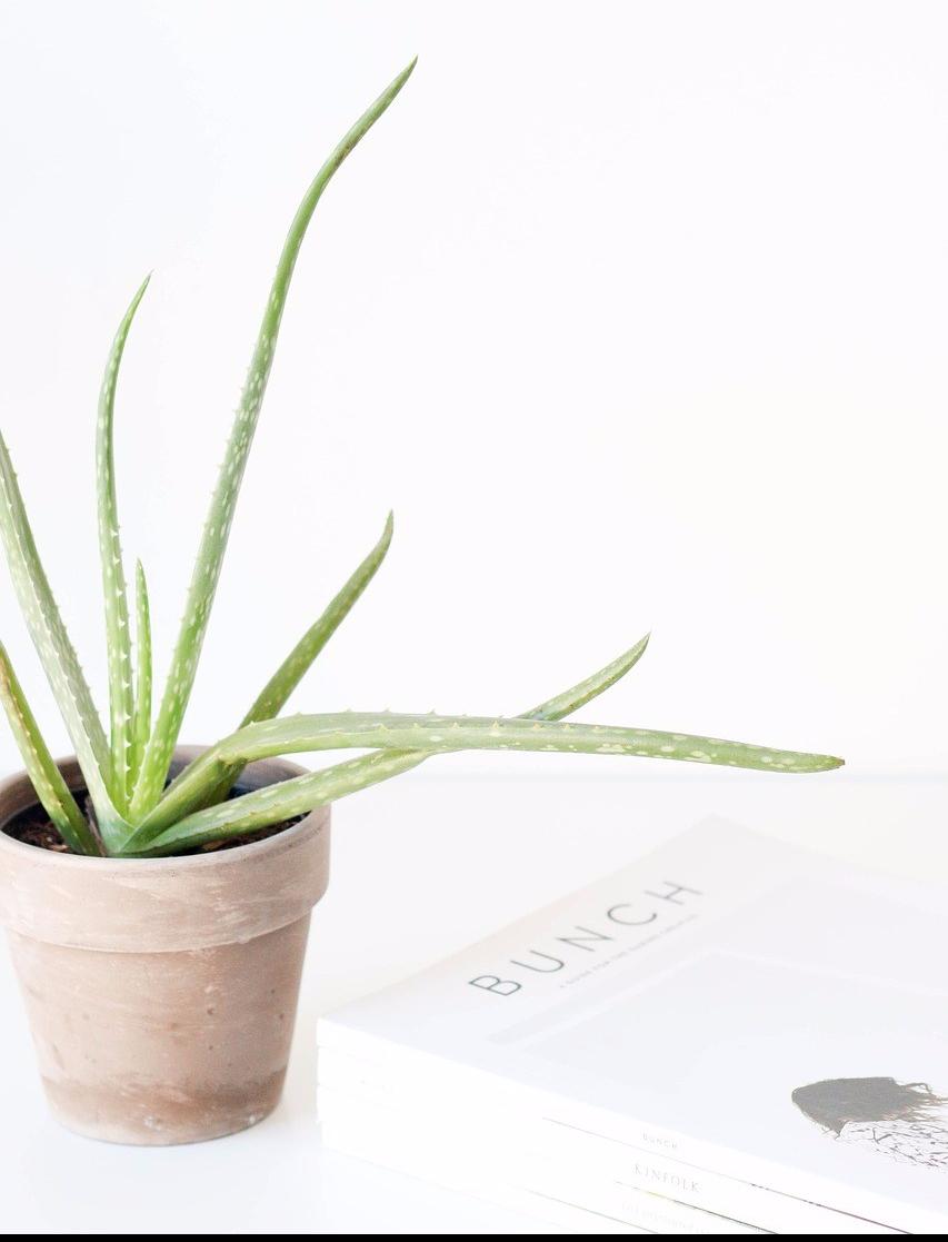 aloe-vera-le-luxe-daxelle-plante.jpg